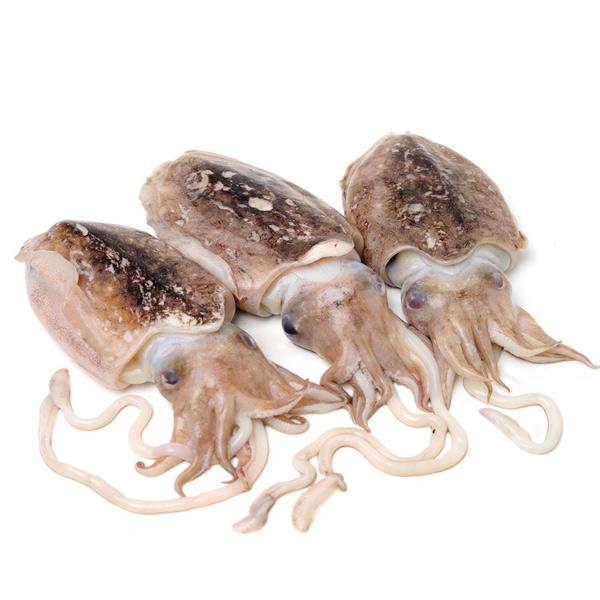 قیمت ماهی مرکب کامل